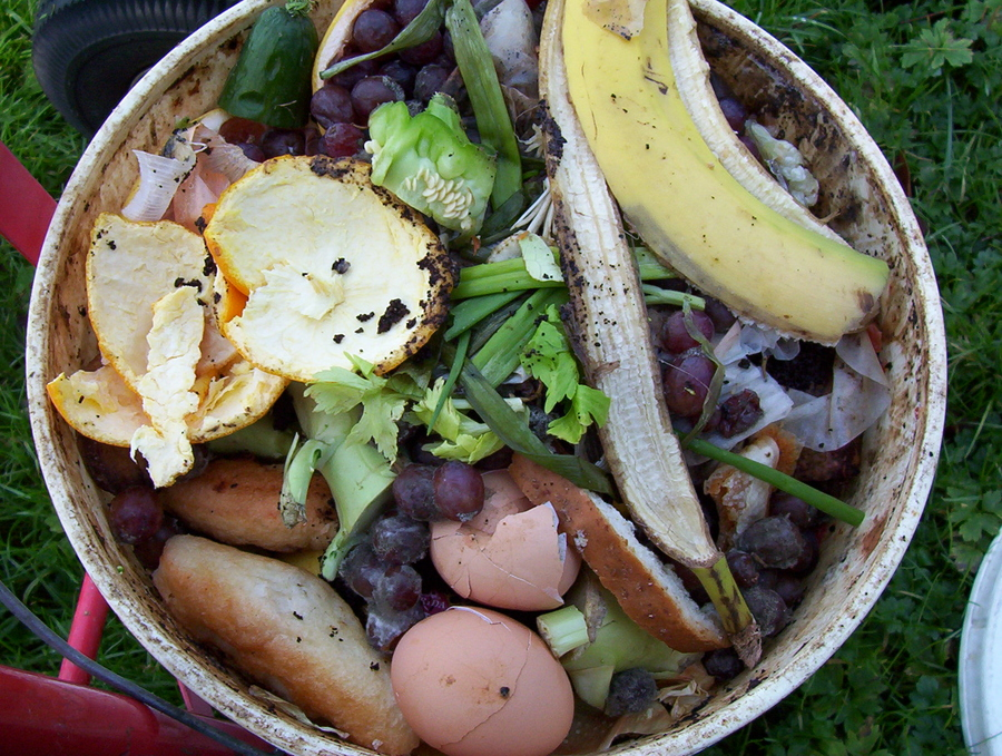 Household food scraps for composting