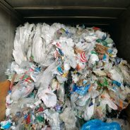 Plastic Bags Get a New Life