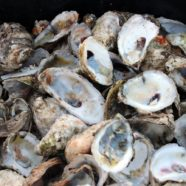 Oyster Shell Recycling at McIntire Recycling Center