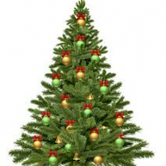 "2019-2020 ""Christmas Tree Recycling Program"" Information"